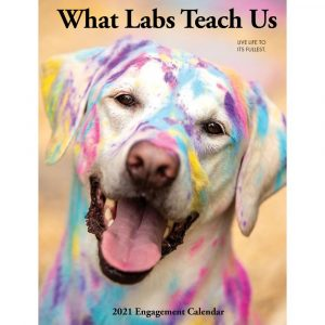What Labs Teach Us Planner
